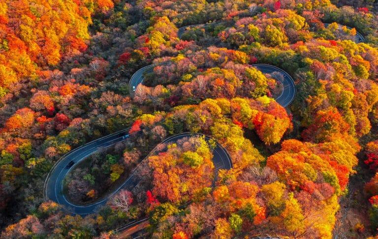 秋の日光といえばココ!『日本の道100選』にも選ばれた坂道<いろは坂>【紅葉】